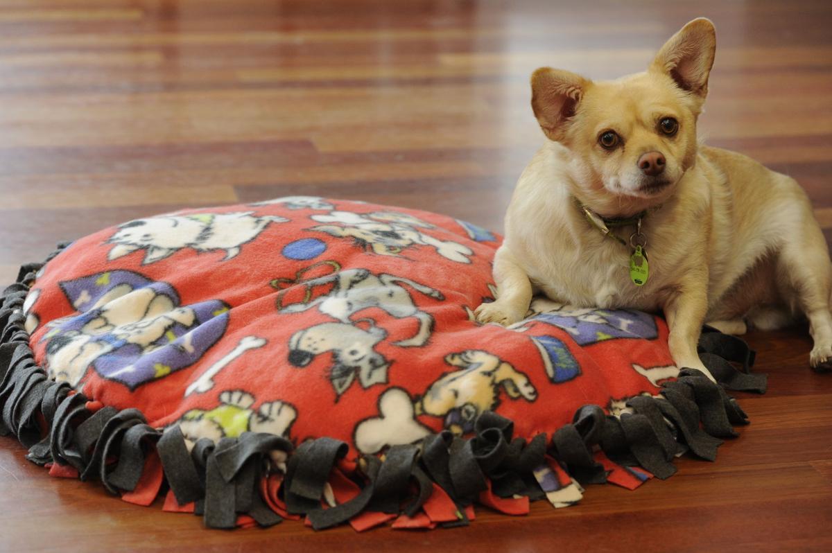 Come creare un cuscino fai da te per cani 10