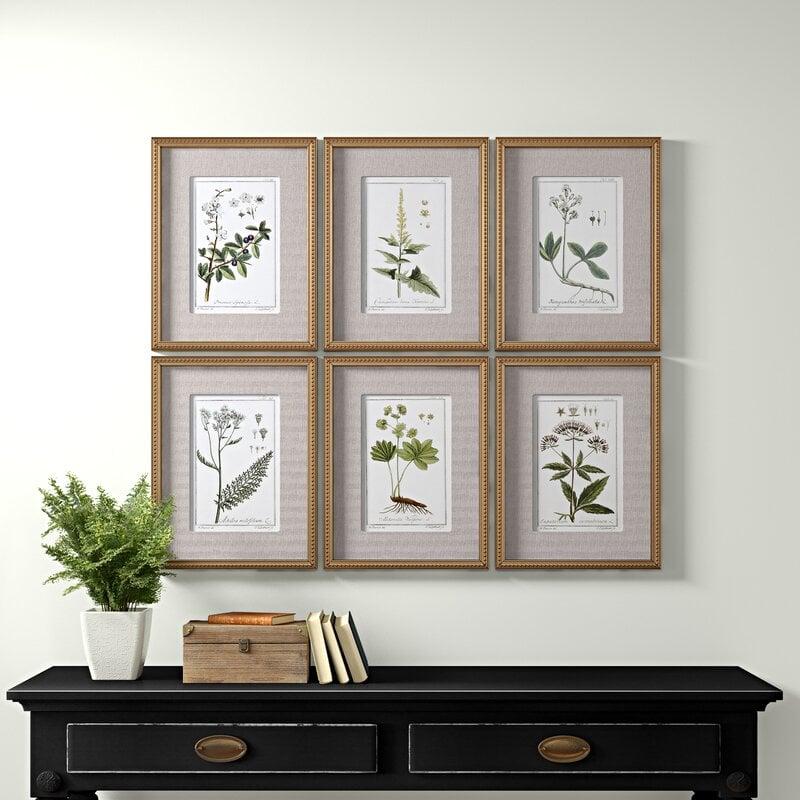 abbellire-casa-piante-botaniche-4