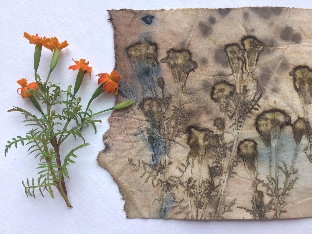 abbellire-casa-piante-botaniche-faidate