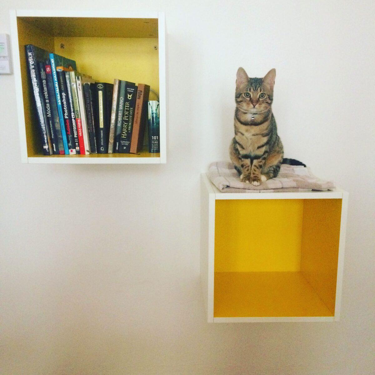 librerie-muro-moderne-cubi1