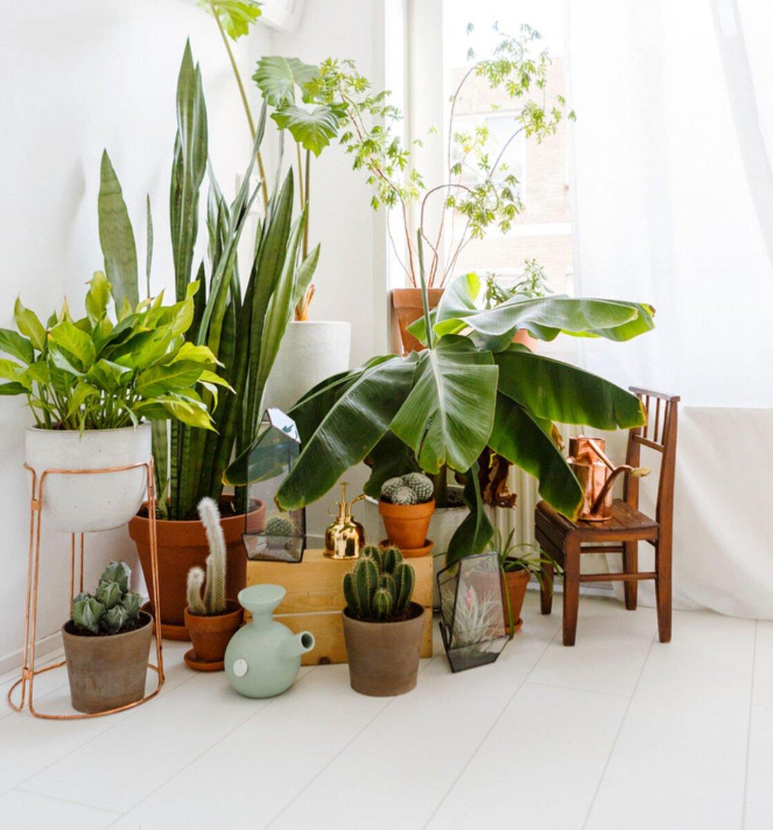 pianta-umidita-3