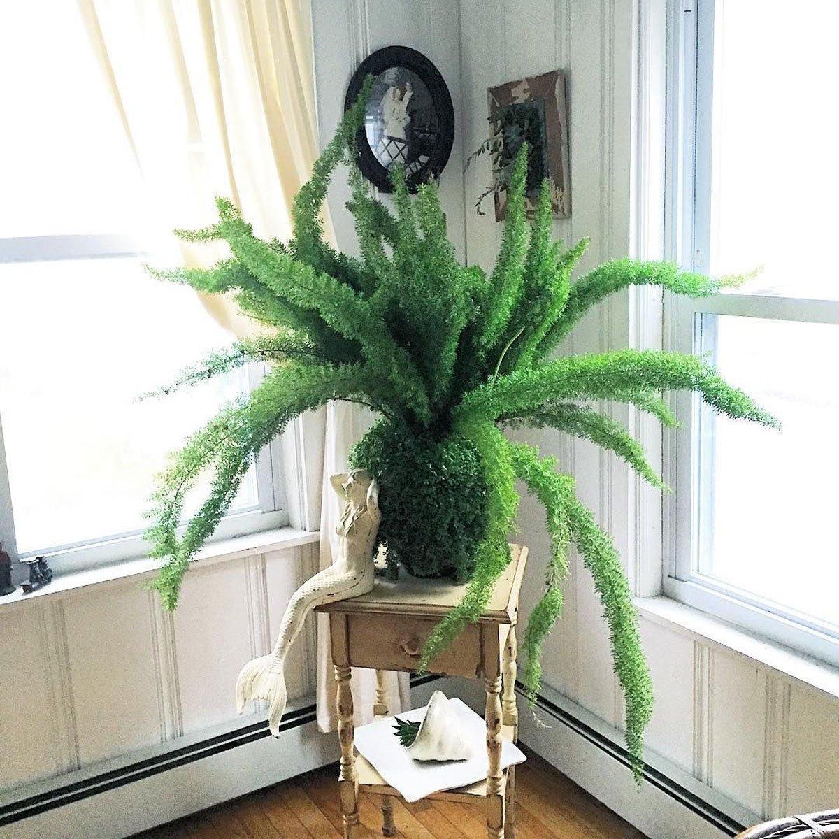 pianta-umidita-asparagina-2