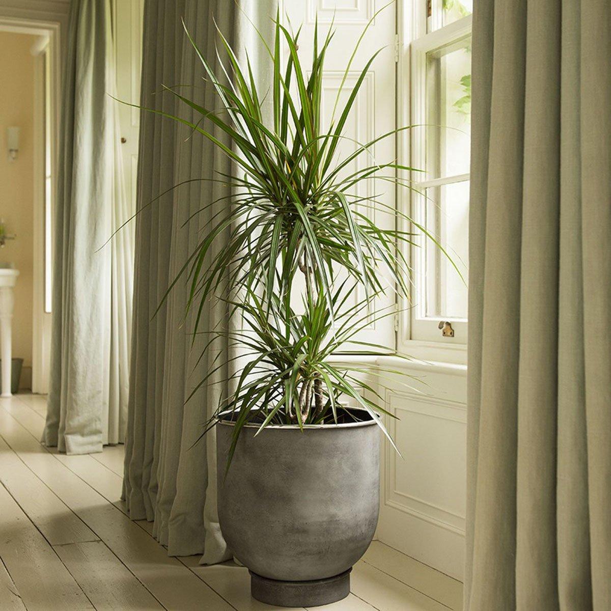 pianta-umidita-dracena-1