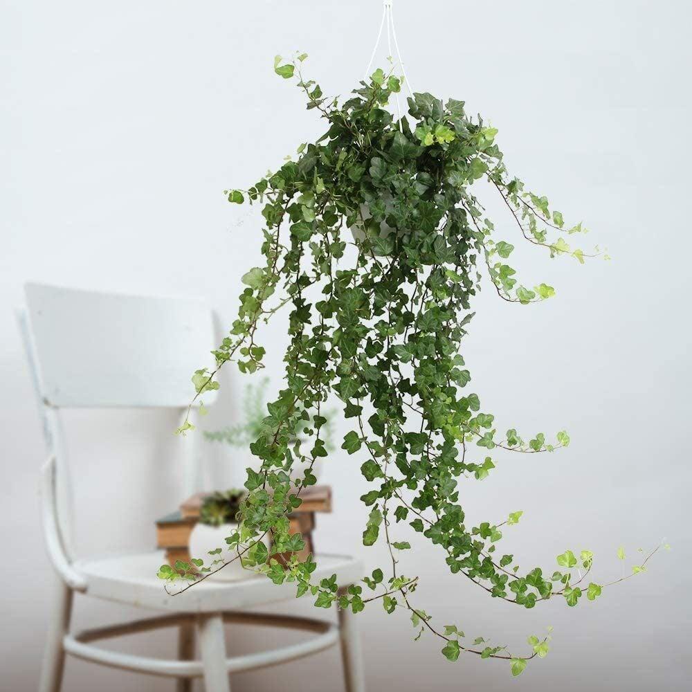 Autunno: 10 piante che non soffrono l'umidità della casa
