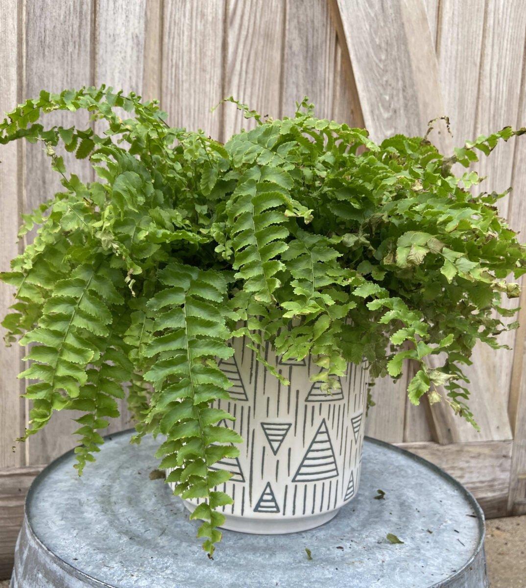 pianta-umidita-felce-1