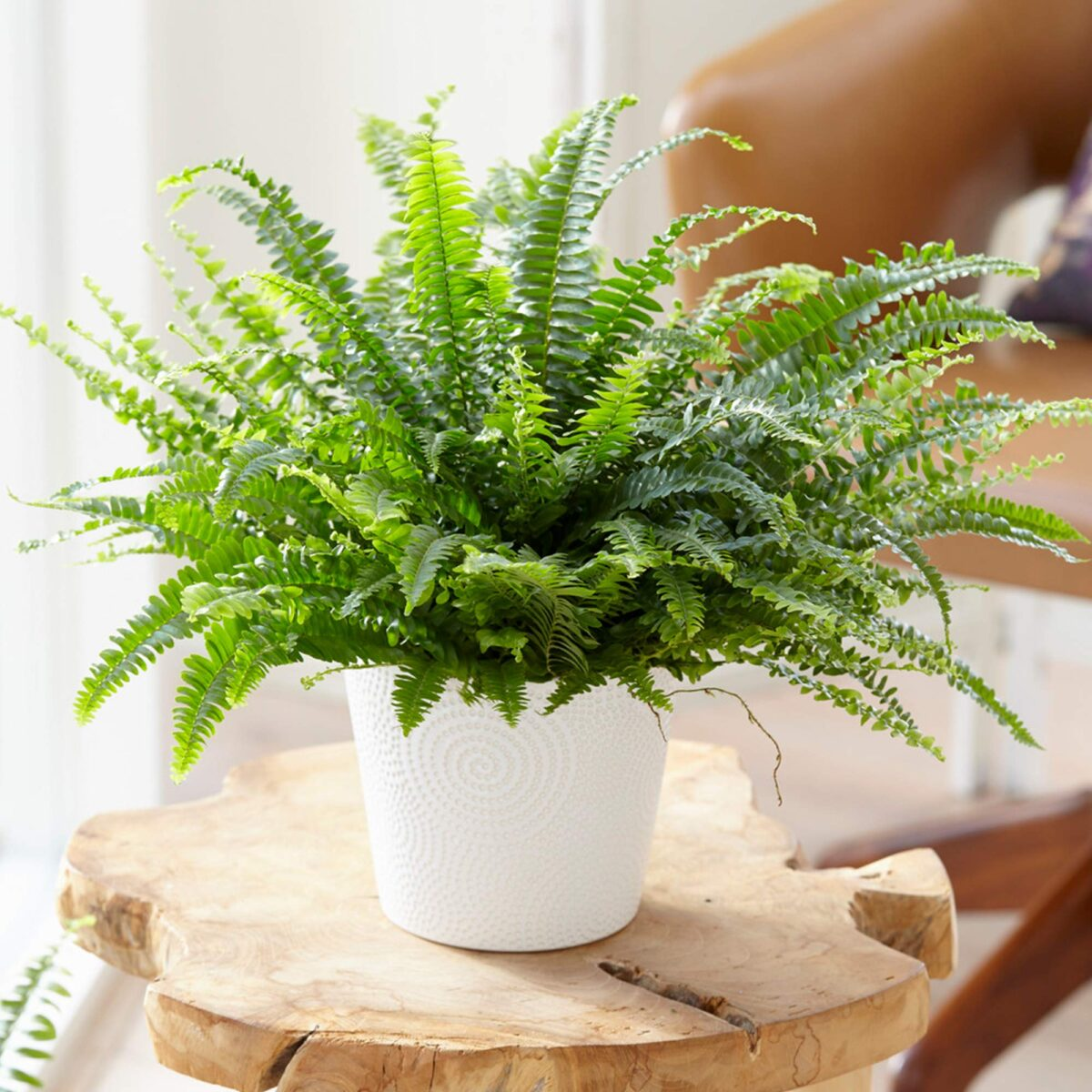 pianta-umidita-felce-2