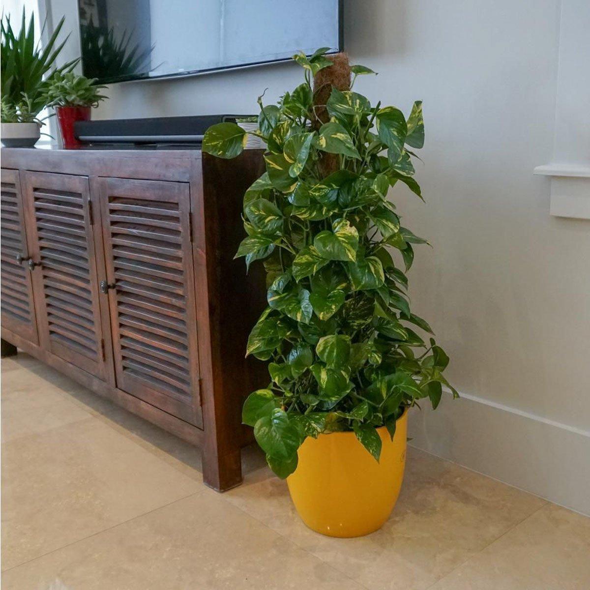 pianta-umidita-potos-3