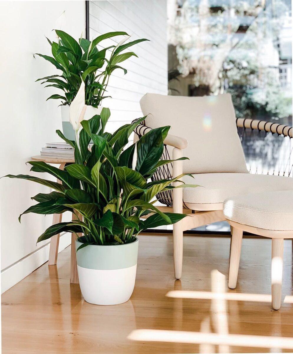 pianta-umidita-spat-2