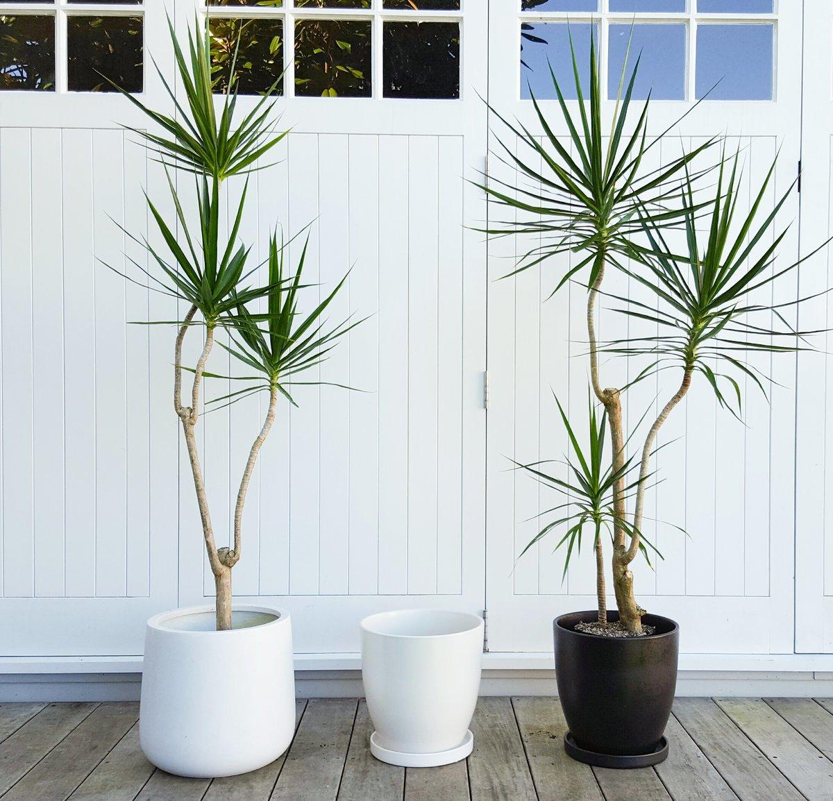 piante-poca-acqua-1