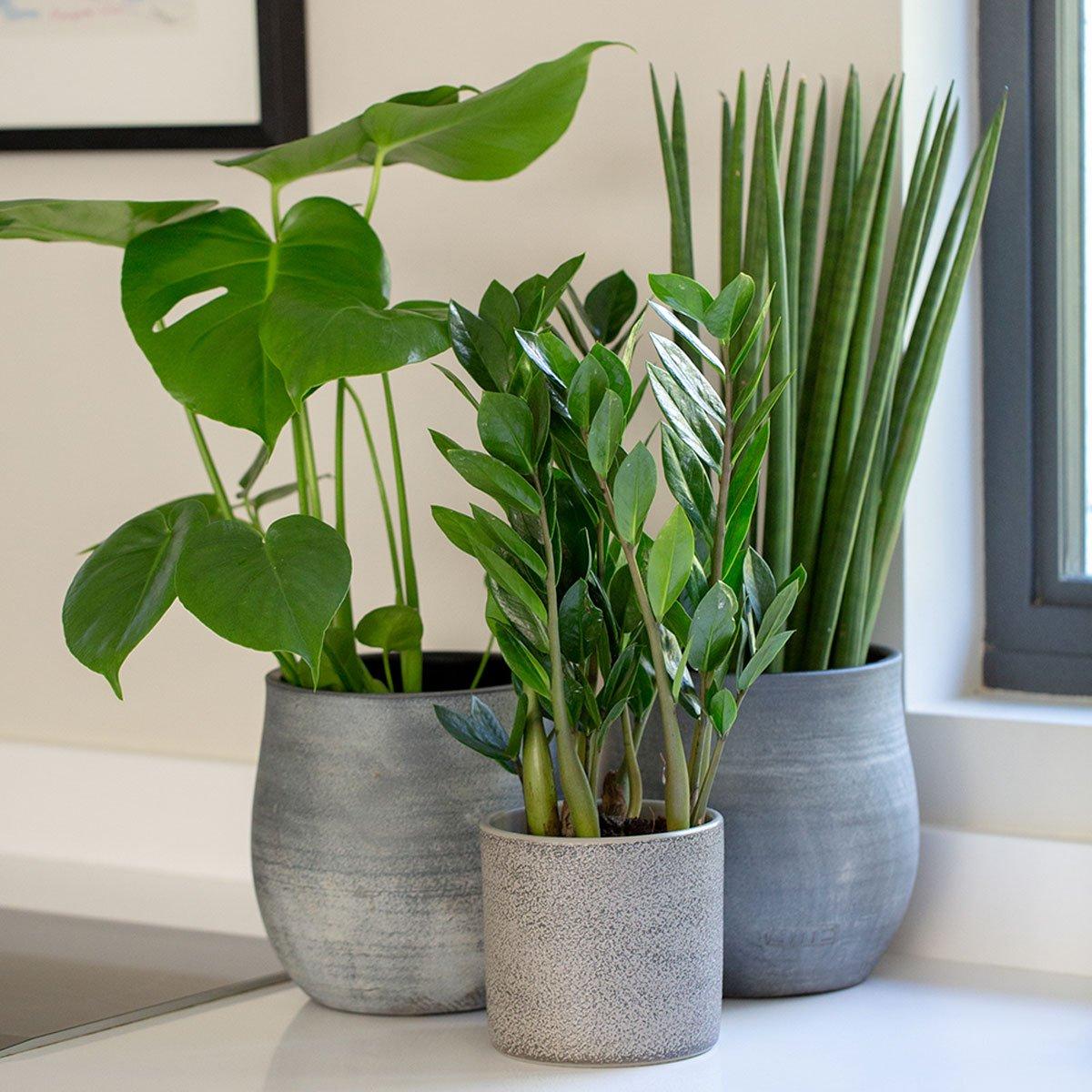 piante-poca-acqua-11