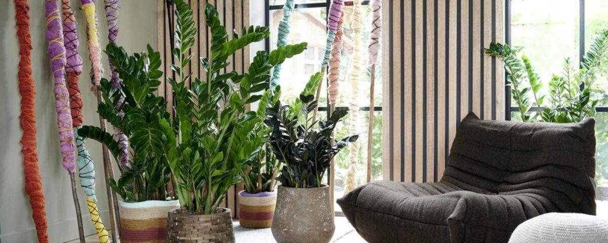 piante-poca-acqua-12