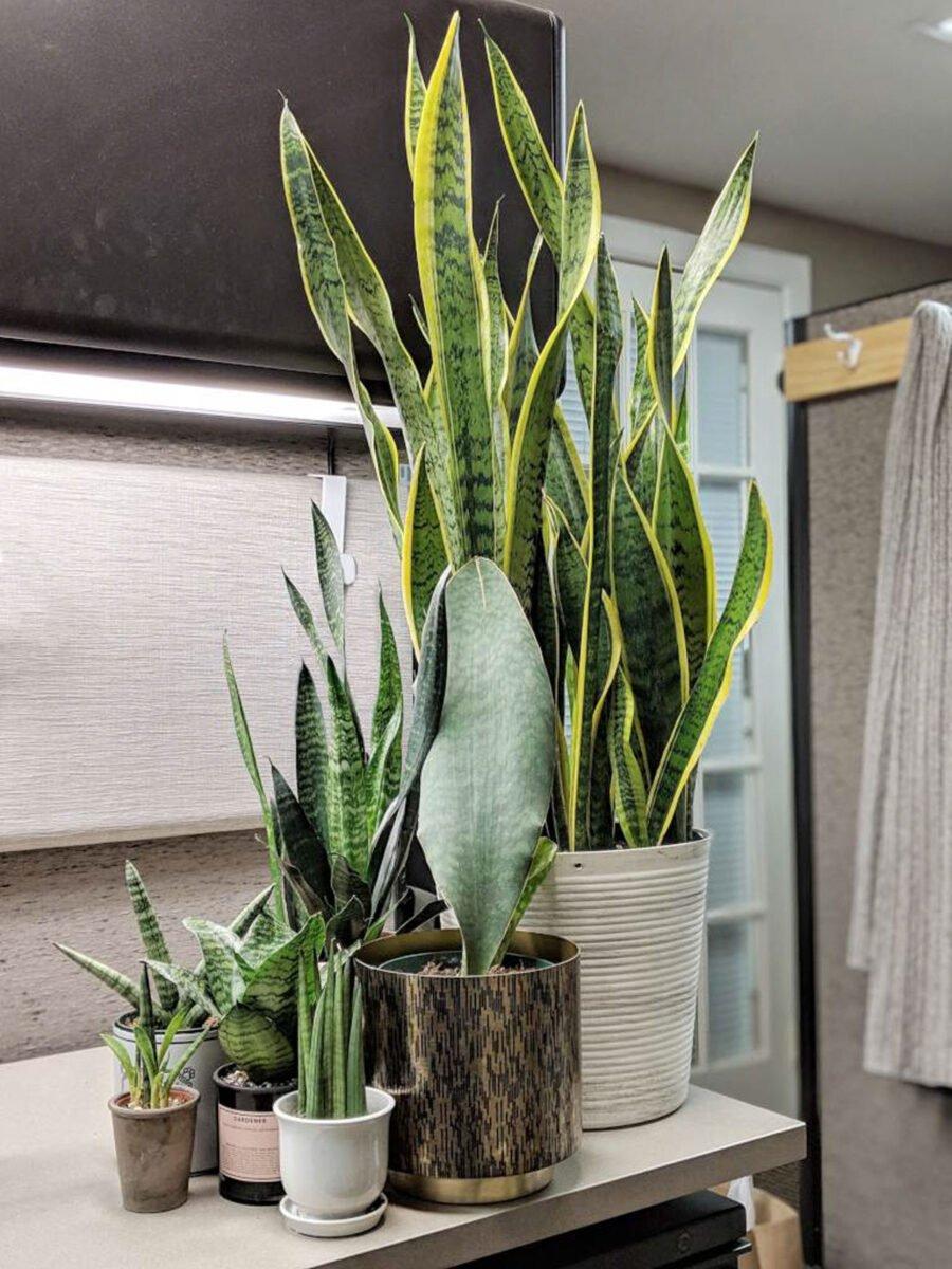 piante-poca-acqua-2