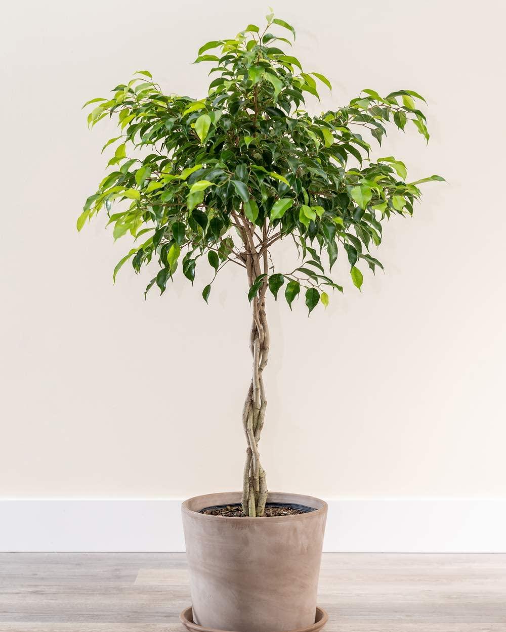 piante-poca-acqua-4