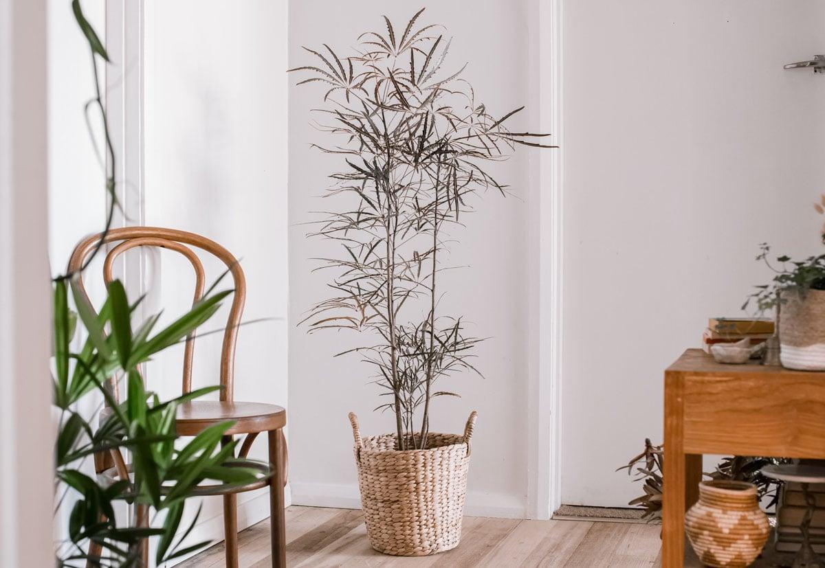 piante-poca-acqua-5