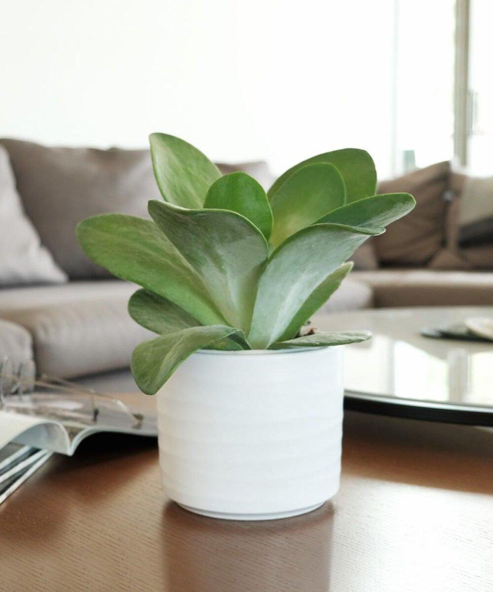 piante-poca-acqua-7
