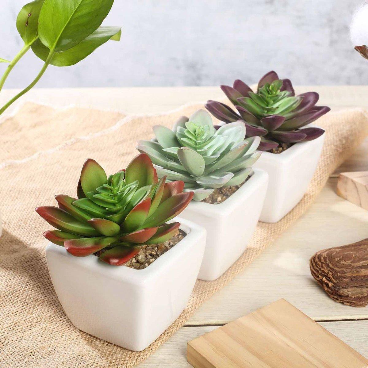 piante-poca-acqua-8