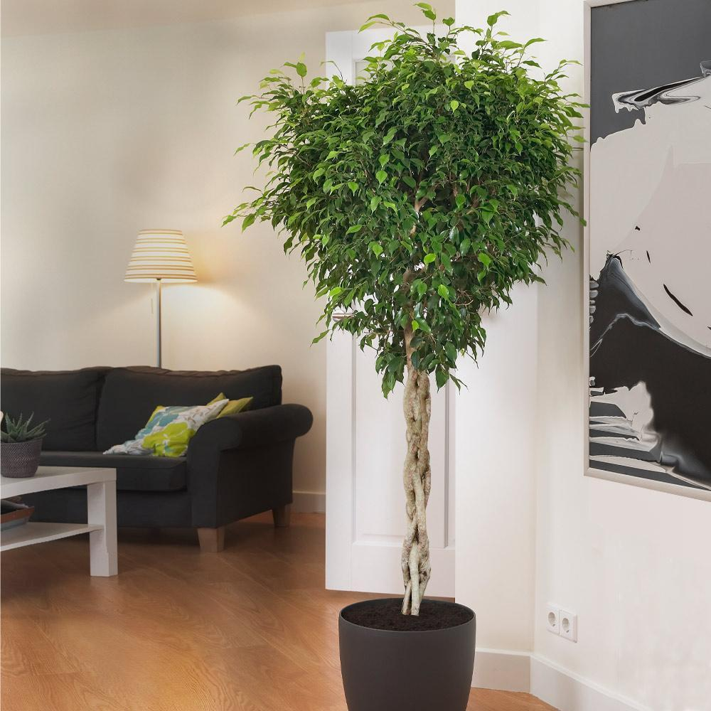 piante-poca-luce-10