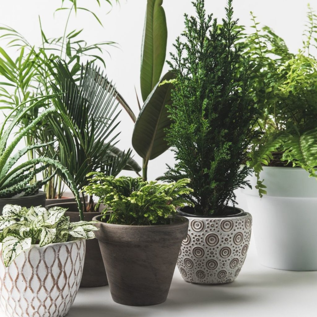 piante-poca-luce-11