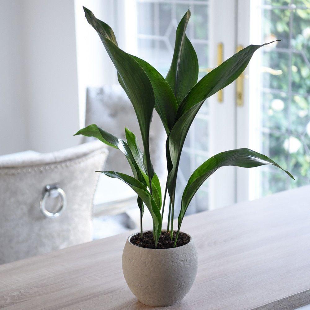 piante-poca-luce-2