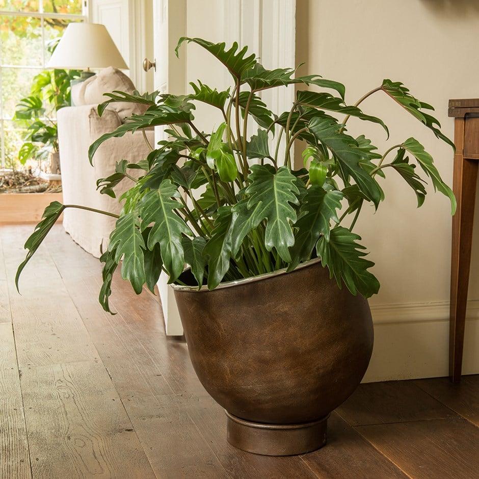 piante-poca-luce-6
