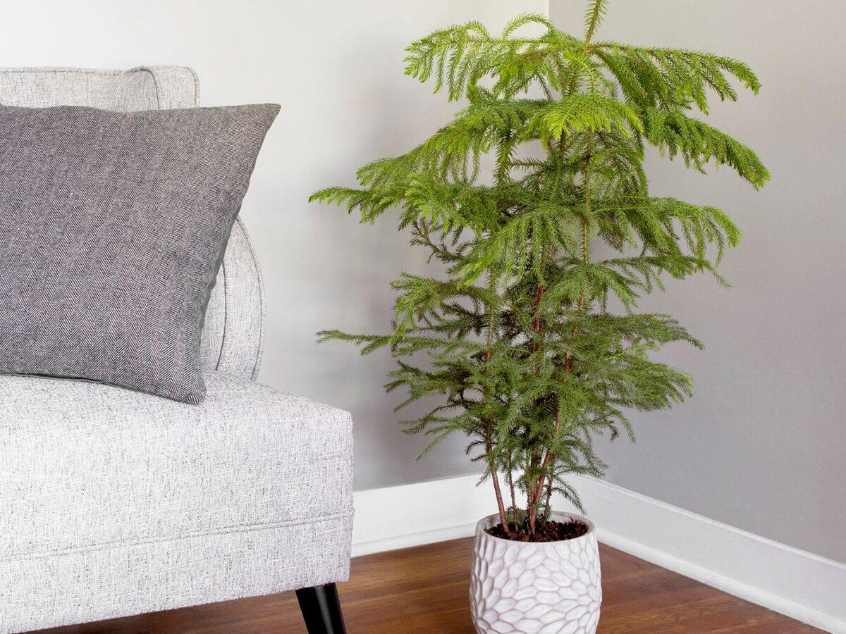 piante-poca-luce-7