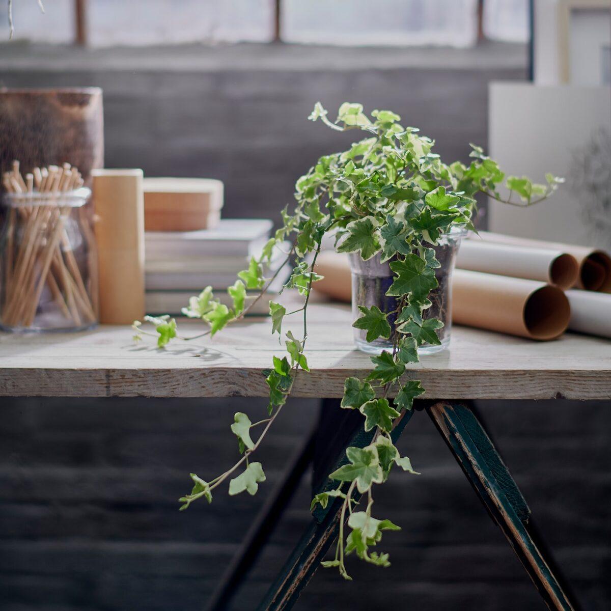 piante-poca-luce-8
