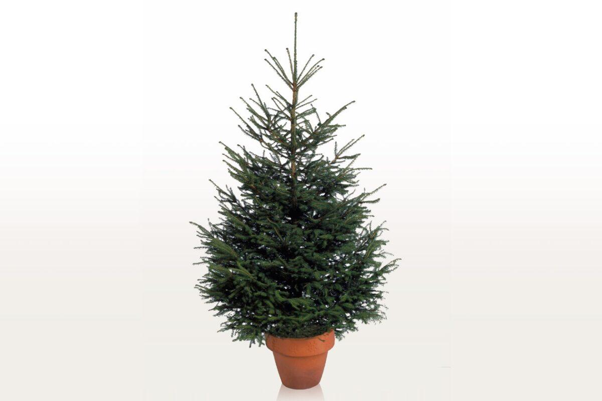 ikea-albero-natale