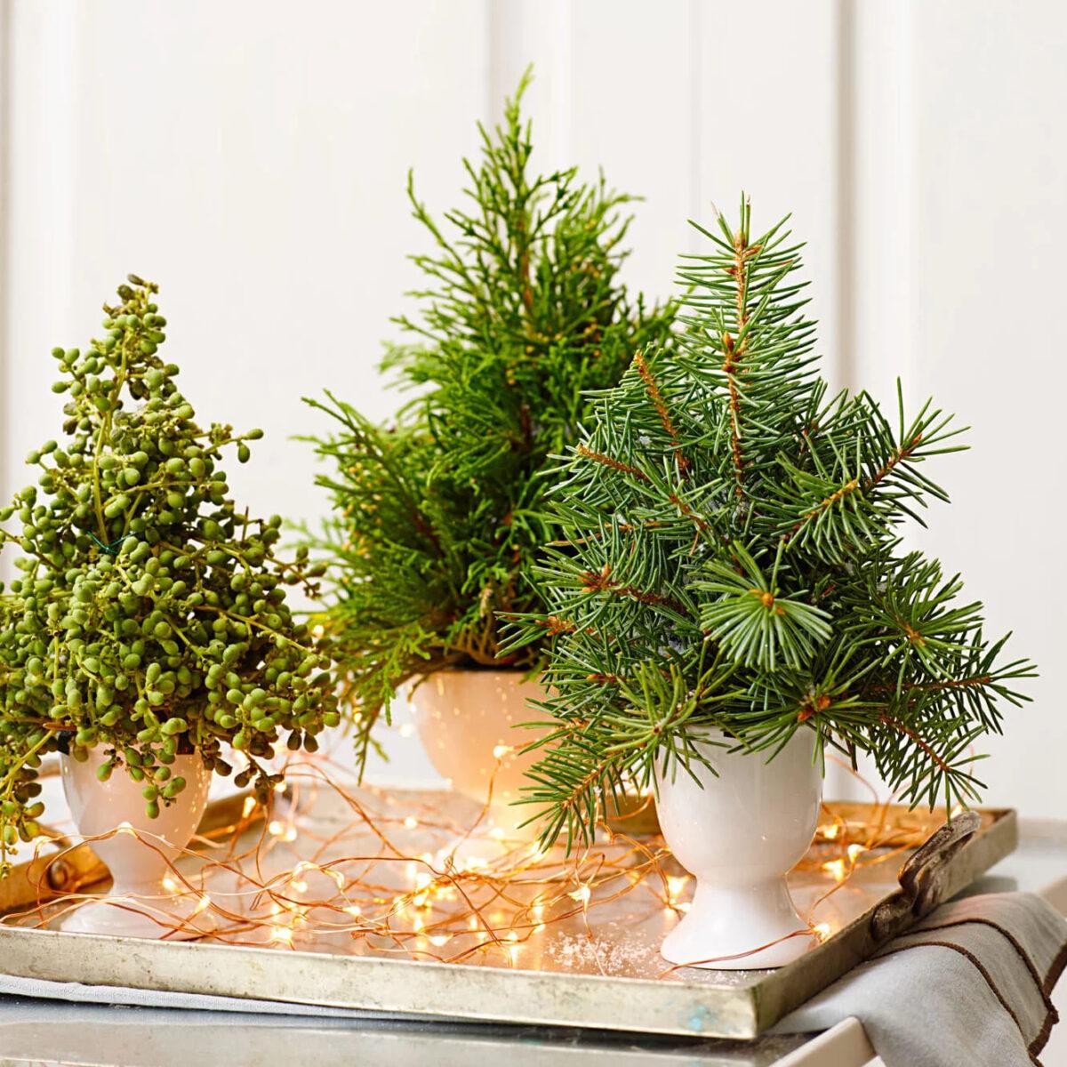 piante-adatte-cena-capodanno-3