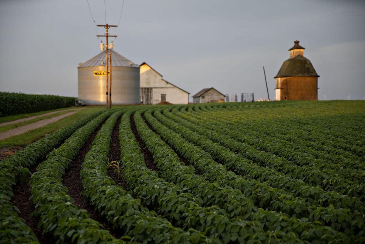 cosa-coltivare-terreno-agricolo-1