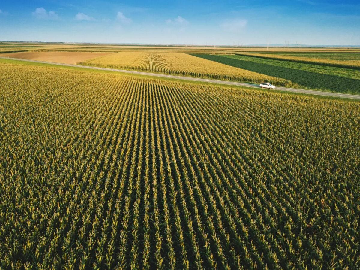 cosa-coltivare-terreno-agricolo-3