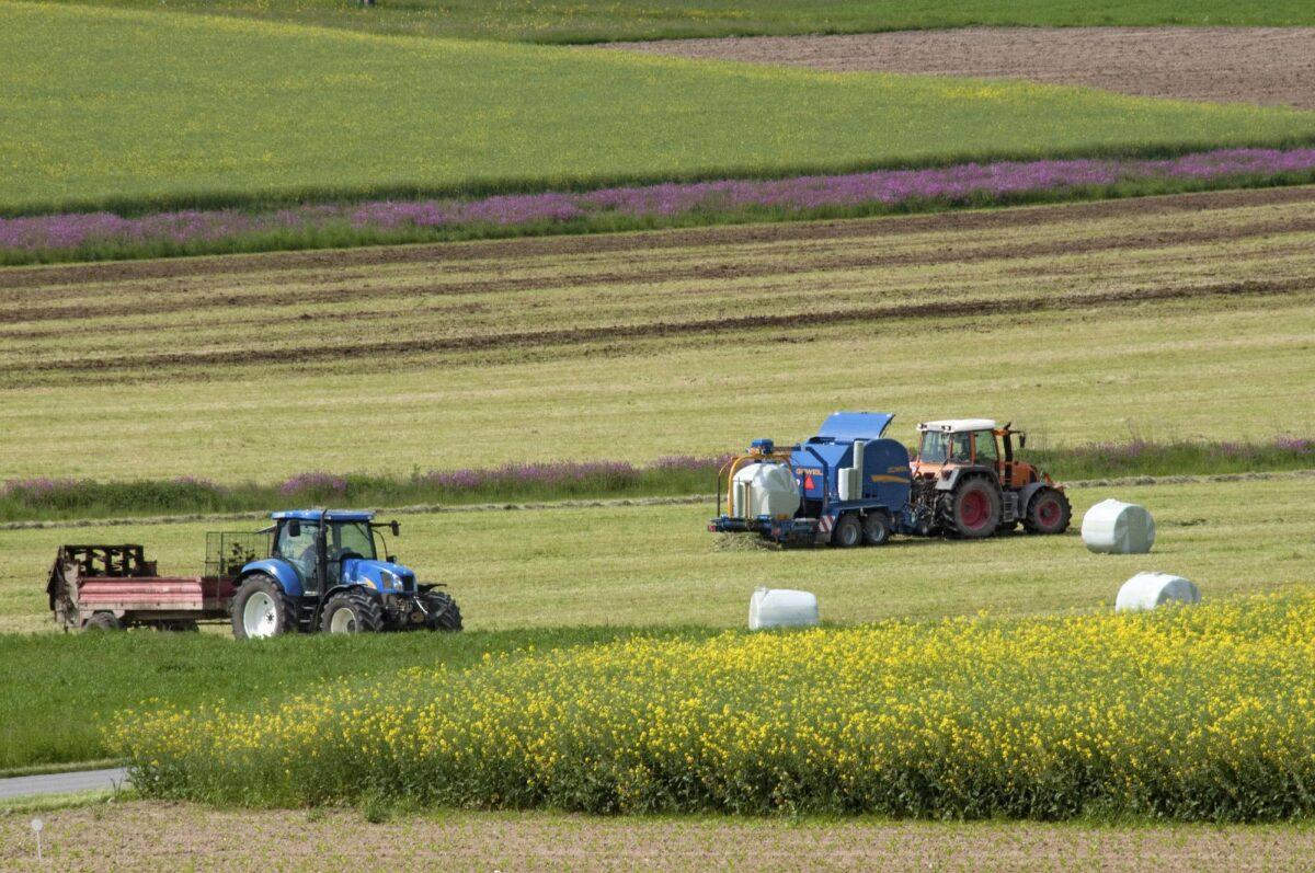 cosa-coltivare-terreno-agricolo-4