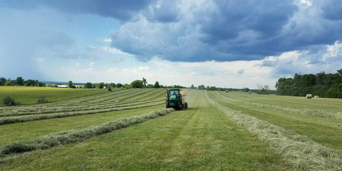 cosa-coltivare-terreno-agricolo-5