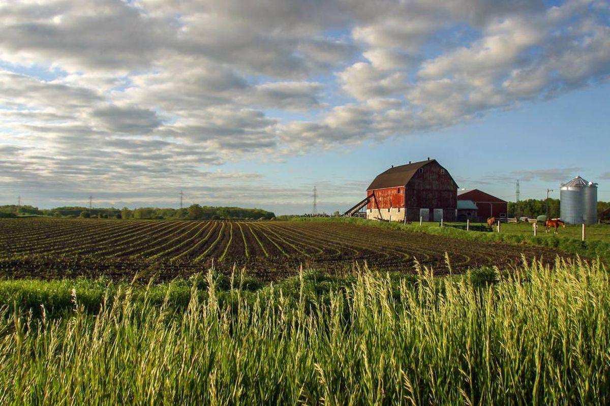 cosa-coltivare-terreno-agricolo-6