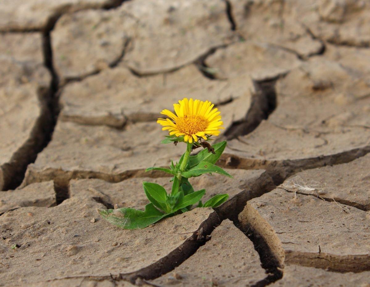 piante-resistenti-alla-siccita-