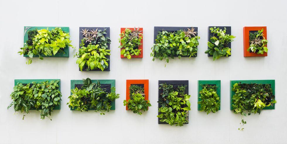 quadri-fai-da-te-abbellire-casa-green