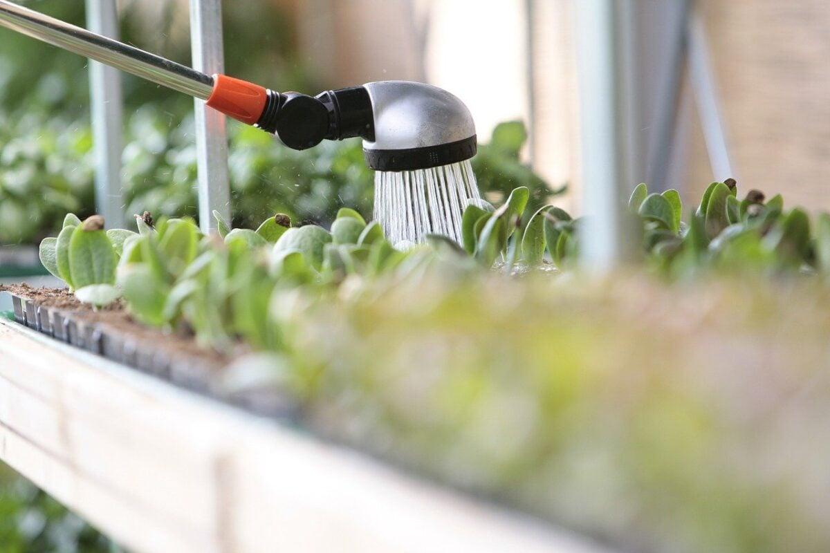 Come innaffiare le piante in estate