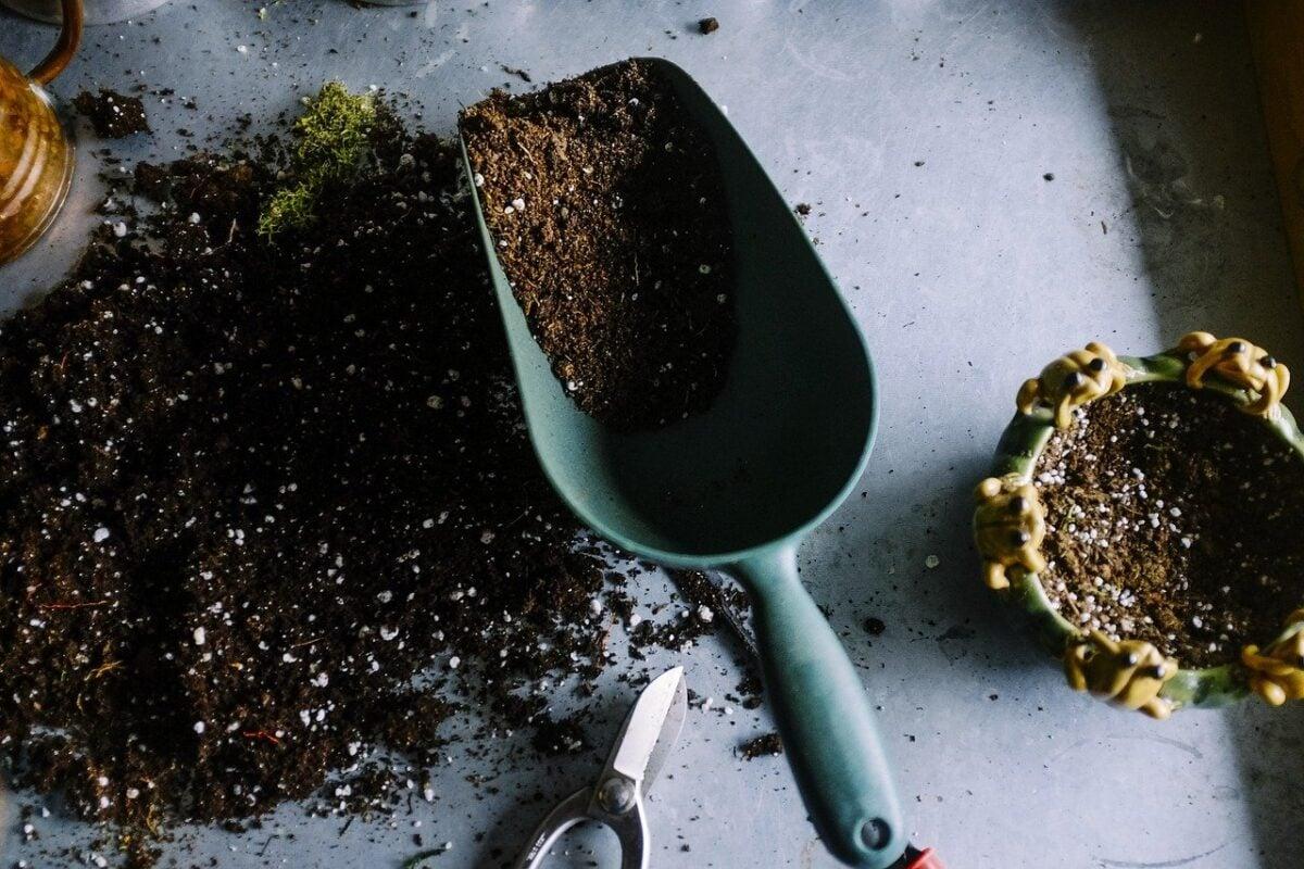 come-innaffiare-le-piante-in-estate-20