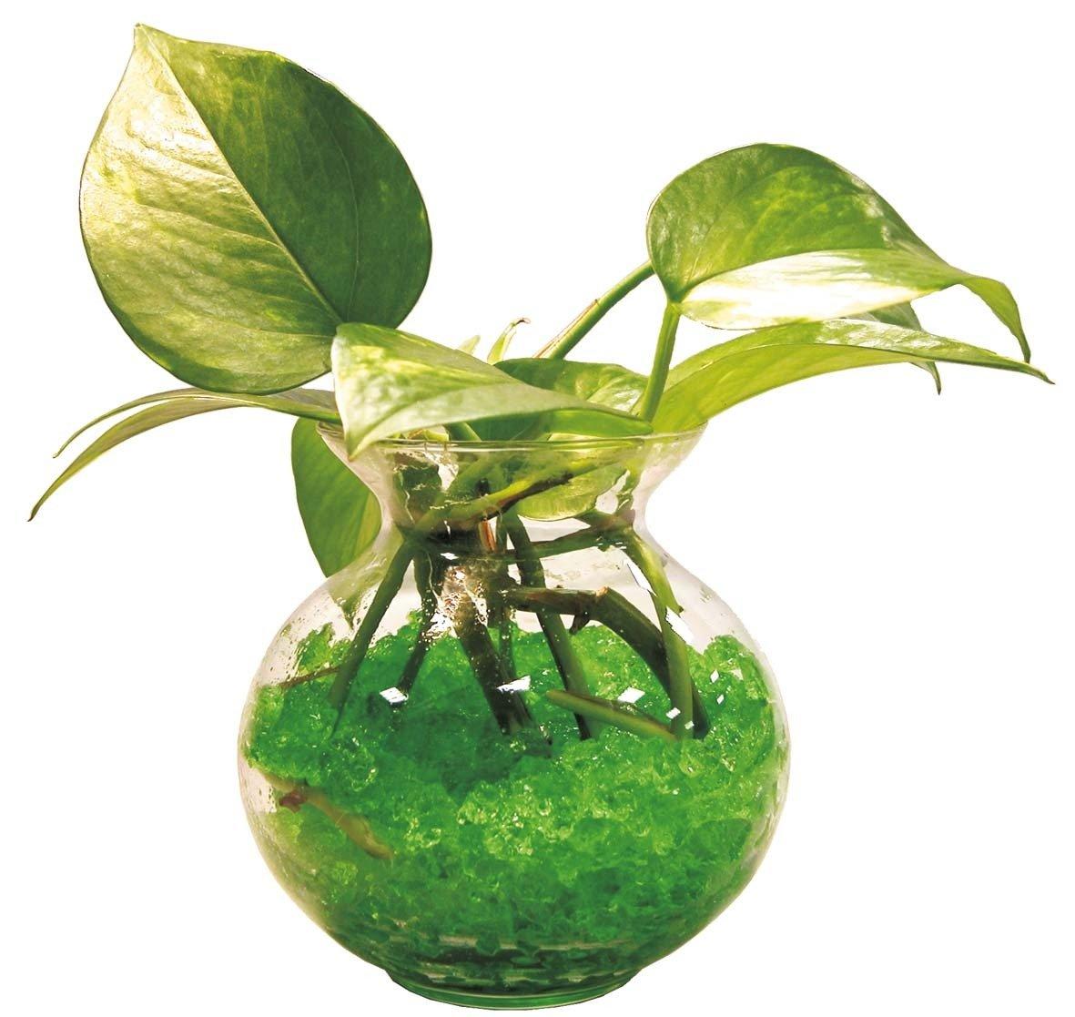 come-innaffiare-le-piante-in-estate-3