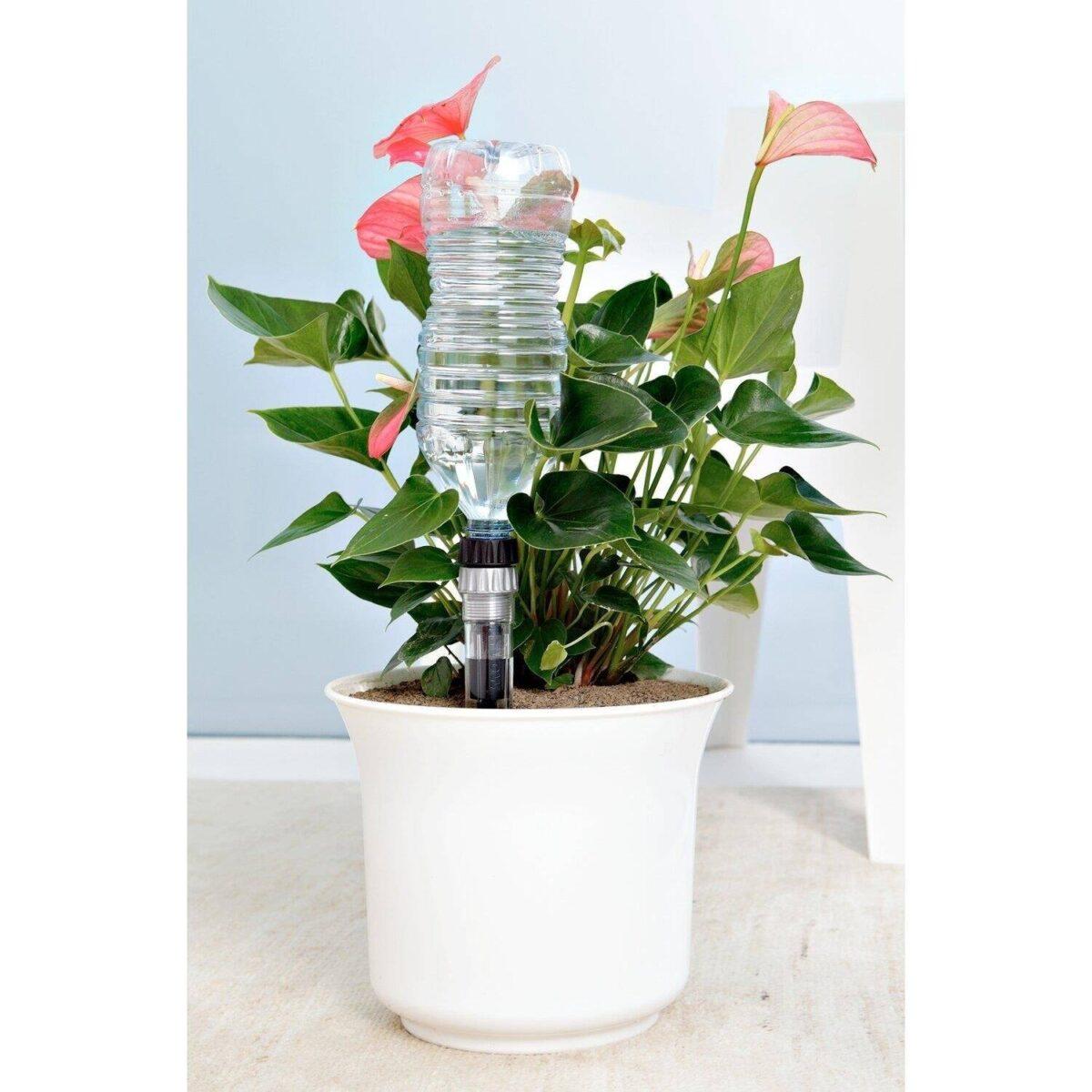 come-innaffiare-le-piante-in-estate-5