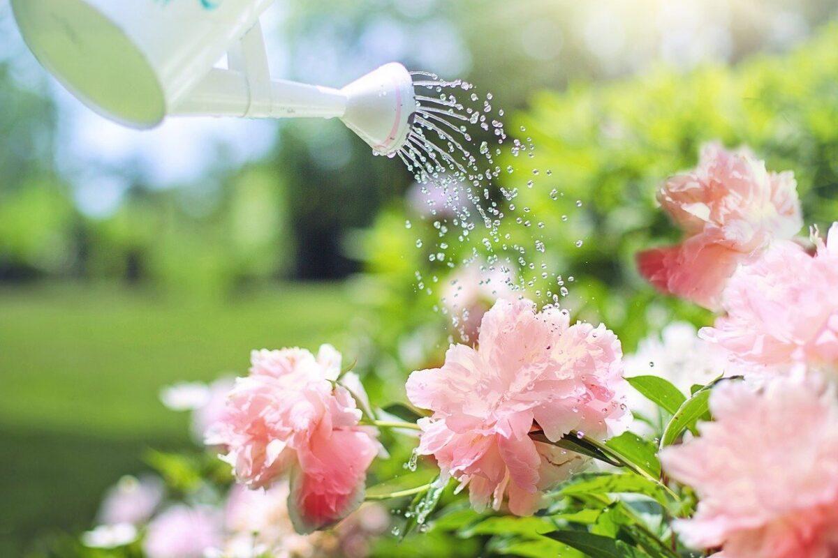 6 cose da non fare quando bagniamo le piante
