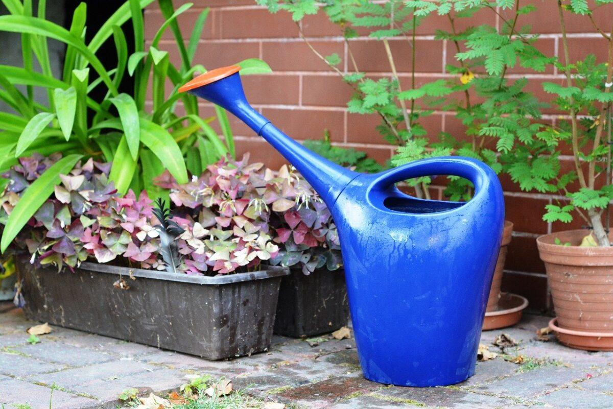 cosa-non-fare-quando-innaffiamo-le-piante-4