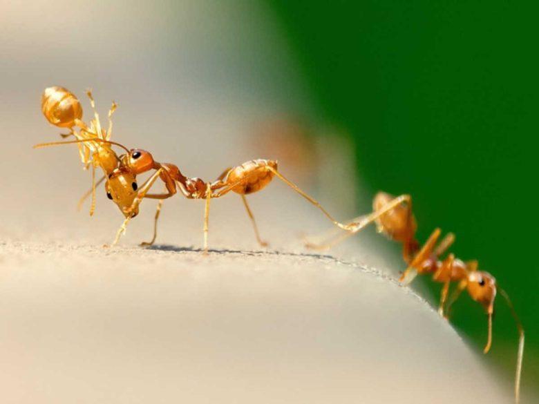 formiche-sul-balcone