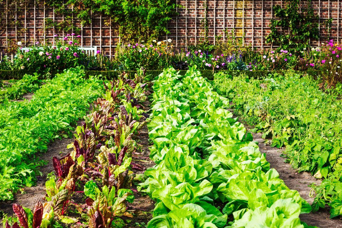 E' possibile fare un orto in un giardino condominiale?