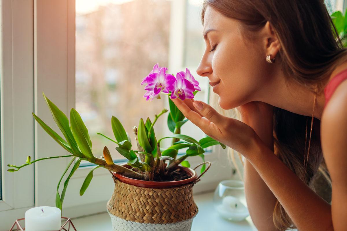 piante-d'appartamento-per-l'estate-14
