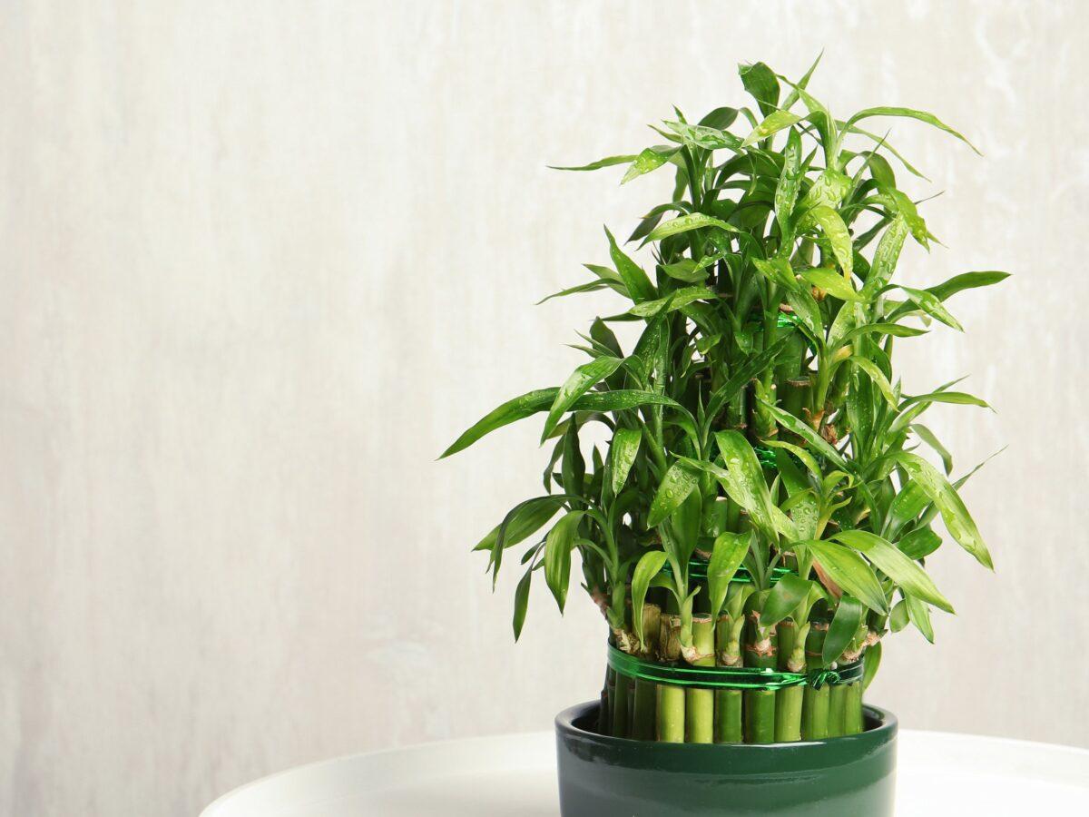 piante-d'appartamento-per-l'estate-8