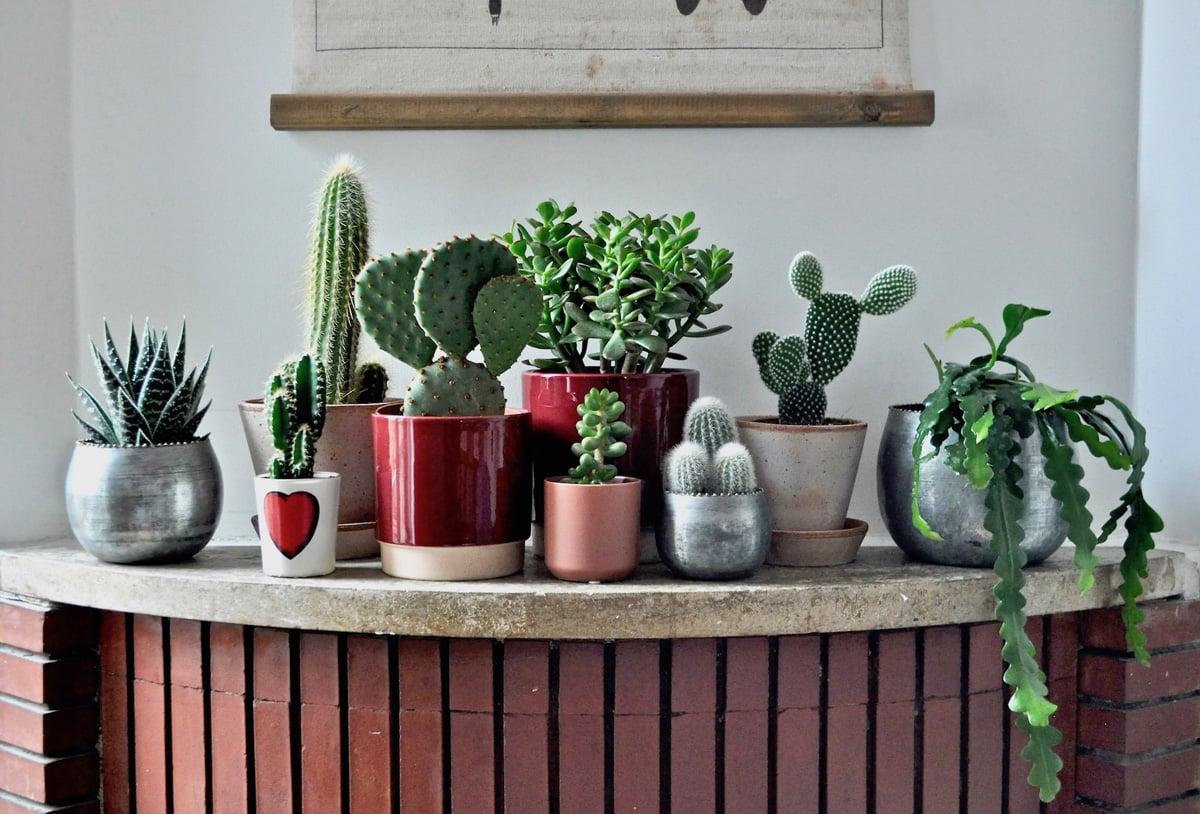 piante-d'appartamento-per-l'estate-9
